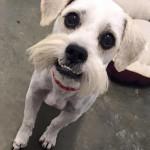 Bob - Adopted Aug 2016