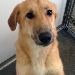 Chloe - Transfered to PAWS Rescue on March 20, 2014