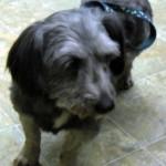 Jojo - Adopted January 2013