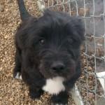 Loki - Adopted April 2014