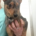 Scruffy - Transfered to PAWS Rescue on March 15, 2014