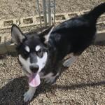 Tikka - Adopted June 2014