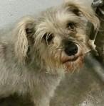 Trixie - Adopted November 2014