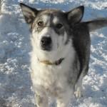 Winnie - Adopted February 26, 2014