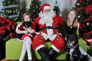 Santa Paws family