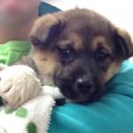 Belle - Adopted December 2014