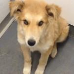 Benji - Adopted October 2014