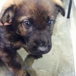 Bindi - Adopted December 2015
