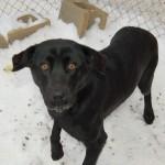 Jada - Adopted January 2014