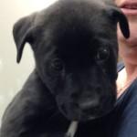 Liza - Adopted November 2014