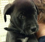 Mr. Grey - Adopted December 2014