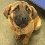 Ruby - Adopted February 2015