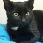 Milo - Adopted November 2014