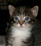 Tink - Adopted December 2014