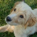 Chester (Barley) Adopted July 2014