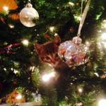 Finn - Adopted January 2013