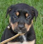 Rachel - Adopted June 2014